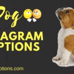 Best Dog Captions