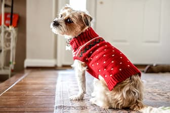 Dog Outfit Captions