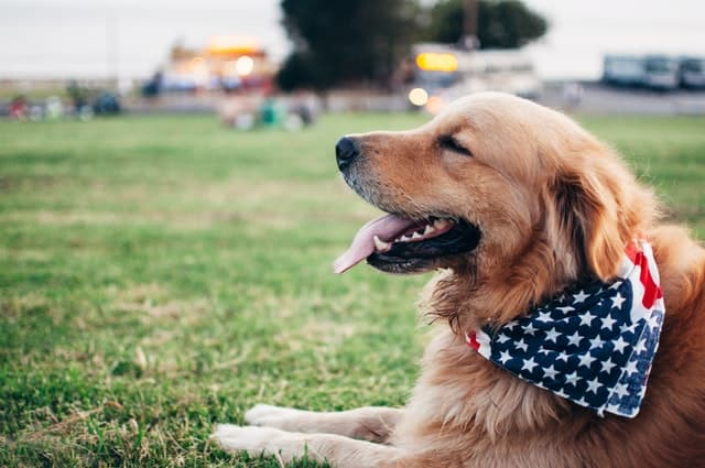 4th Of July Captions for Dogs for Patriotic Pics