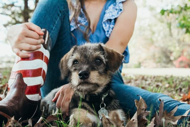 4th of July Dog Captions