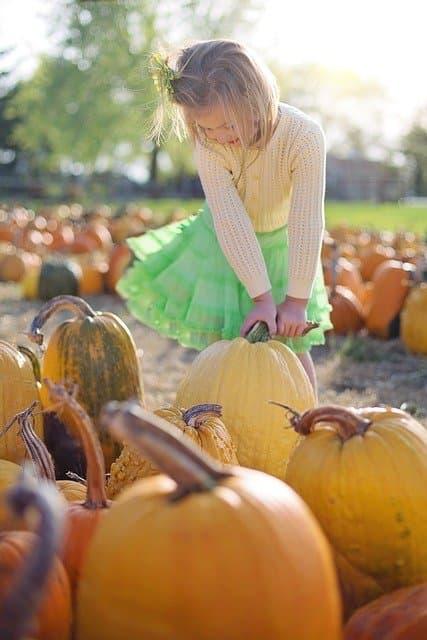 Funny Pumpkin Patch Captions