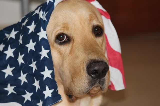 Patriotic Instagram Captions for Dogs Pictures