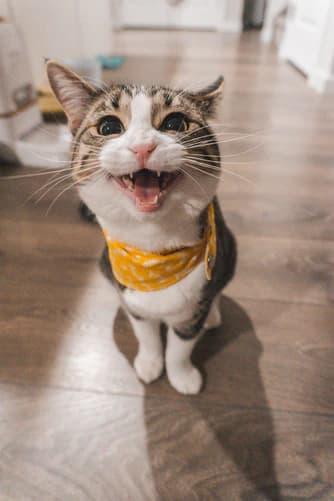 Caption for Cat Eyes