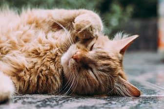Cat Captions for Instagram