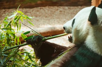 Zoo Animal Captions