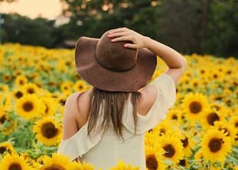 Aesthetic Sunflower Captions for Instagram Post