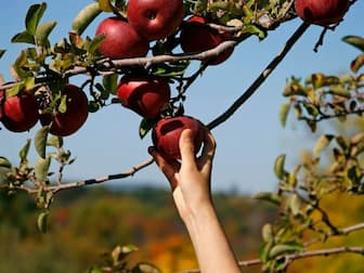 Cute Apple Picking Captions for Couples