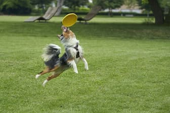 Frisbee Quotes for Dogs